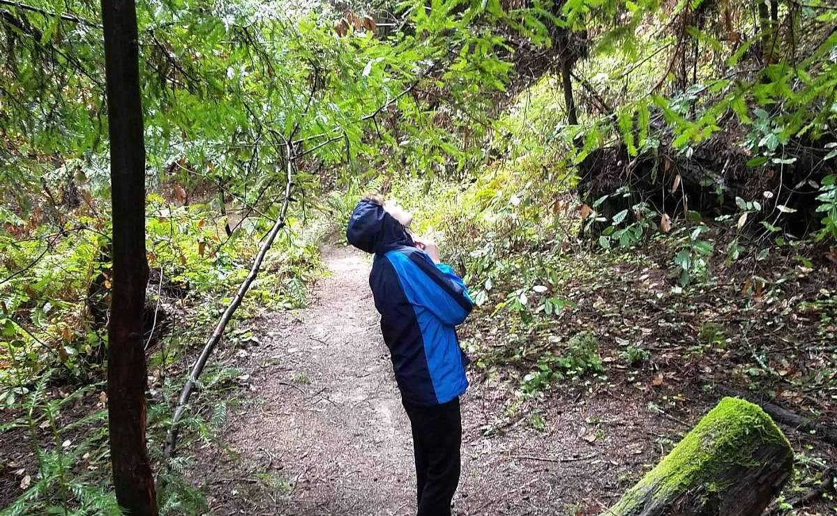 A student in the forest on a rainy day, appearing to look up at the contact information